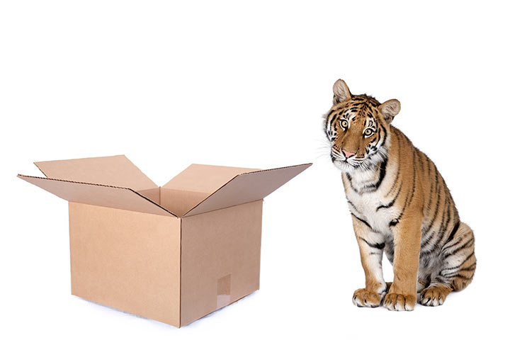 Packing tiger
